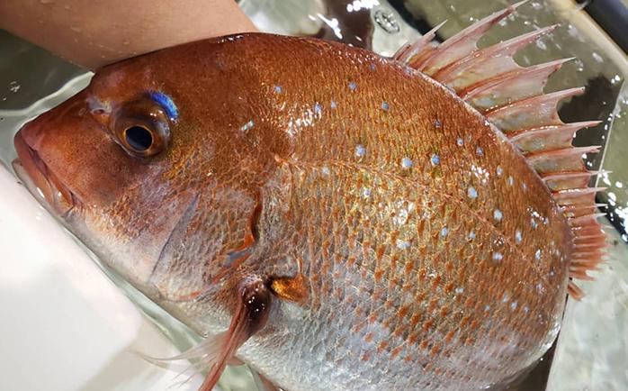 玄海の魚と漁